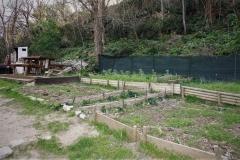 Jardin potager collectif