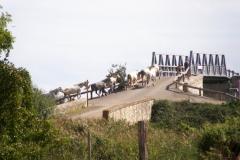 chevaux_sur_le_pont_de_franquevaux 02