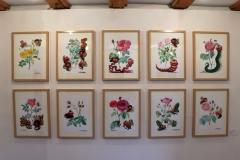 02_Expo_les roses de Redouté