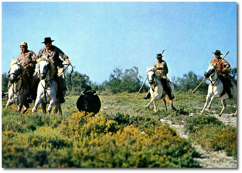 Ferrade aux Cabanes du Vaccarès en 1966 (Collection Robert Faure)
