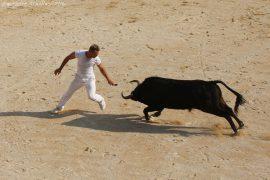 course-taureau-jeun18-(05)