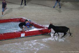 taureau-piscine-(04) (1)