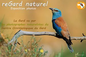 affiche-expo-regard naturel